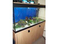 Fluval Roma Designer Aquarium with stand
