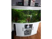 JUWEL 4FT BOW FRONTED FISH TANK WITH BUILT IN PUMP , HEATER , FILTER AND ORIGINAL LIGHTING.