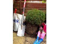 Buxus 'Box' Topiary Hedge Shrub