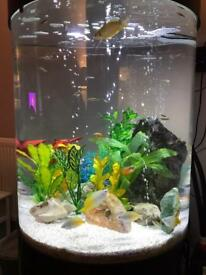 Extremely Unusual Cylindrical 260ltr Tropical Fish Tank, happy to discuss reasonable offer.