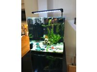 aqua one 55 litter tanks with all equipment