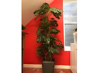 Artificial Office Plant