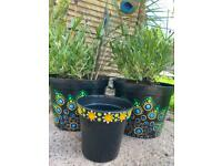 Yellow spotted plant pots £2