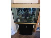 Fish tank aquarium set up including heater filter ornaments and plants