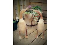 Handcarved wooden ducks with web feet or shoes Bamboo root Natural finish