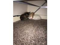 three kittens left!