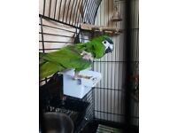 Found hans macaw parrot runcorn, in care of lost and found parrot uk.