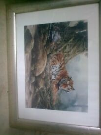 tiger framed picture