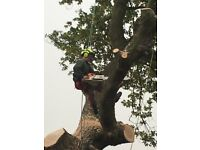 Renato Boi tree services 01977 603734