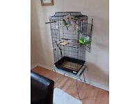 Two beautiful budgies and cage for sale