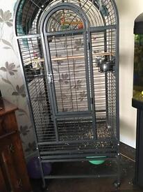 Cockatiel and 6 ft birdcage £90