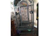 Cockatiel and 6 ft birdcage £130