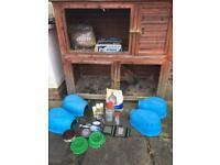 Guinea pig rabbit hutch complete set up