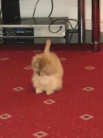 Very beautiful bunny lion head