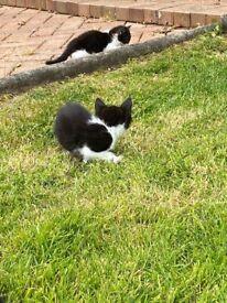 Kittens ready