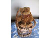 Lovely Child's Wicker Chair in Natural Colour With Additional Teddy Bear