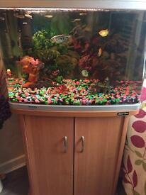 Tropical fish , full set up