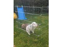 2 male rabbits, double level hutch + accessories