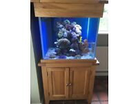 Reef Tank 300l with coral and fish