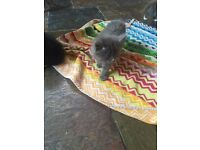 Kittens for Sale **Ready to Go**