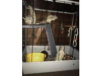 4 male rat with cage £30 may deliver