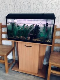 Price drop! Large fish tank with all accessories and stand!!!