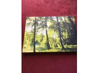 CANVAS WOODLAND PICTURE