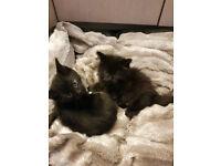 3 kittens 2 females 1 male