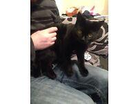 7 month old black tom