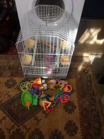 bird cage with cockatiel food and treats