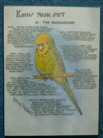 Know Your Pet (Budgerigar) Sign NEW