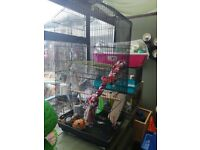 Large budgie cage
