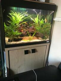 Fluval Roma 90 with stand