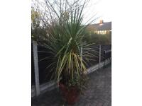 Palm tree style plant in new pot