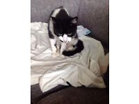 Mixed aged cats for rehomeing free to good homes