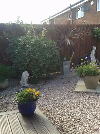 Brownrigg Garden & Fencing Services