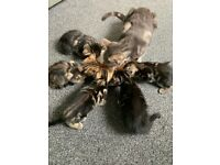 5 beautiful playful kittens