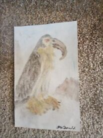 Watercolour hand painted bird of prey. Signed