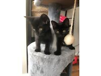 3 lovely kittens looking for loving homes