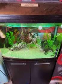 Aquastyle 160 litre fish tank