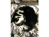 Three very loving cats in need of a new home