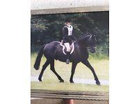 Pony for full/part loan