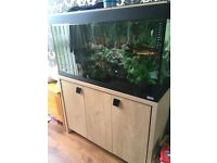 Roma 200 aquarium/tank for sale