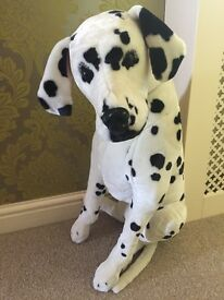 Large standing soft bodied dalmation