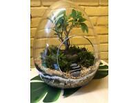 Hand made egg shaped glass terrarium with Ficus bonsai tree