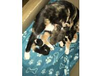 Kittens for sale £120