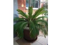 Tropic Palm house/ Garden plant