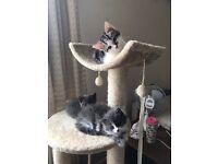 Beautiful Kittens - Ready now