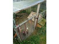 2x Ex Battery Chickens and Coop