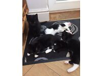 Kittens. Ready for new home